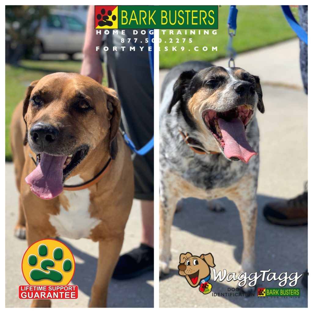 Dog Training Fort Myers - May 2019 -