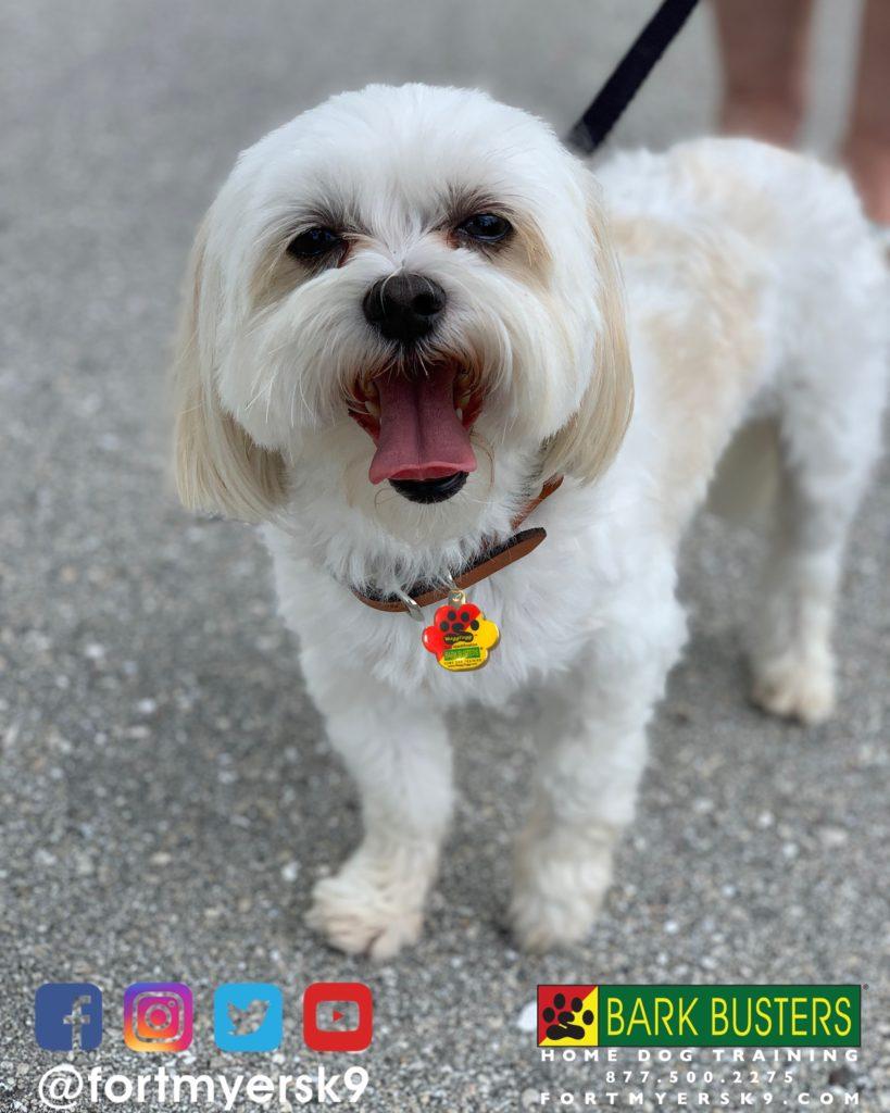 #dogsofbarkbusters #maltitzu #speakdogchangeyourlife