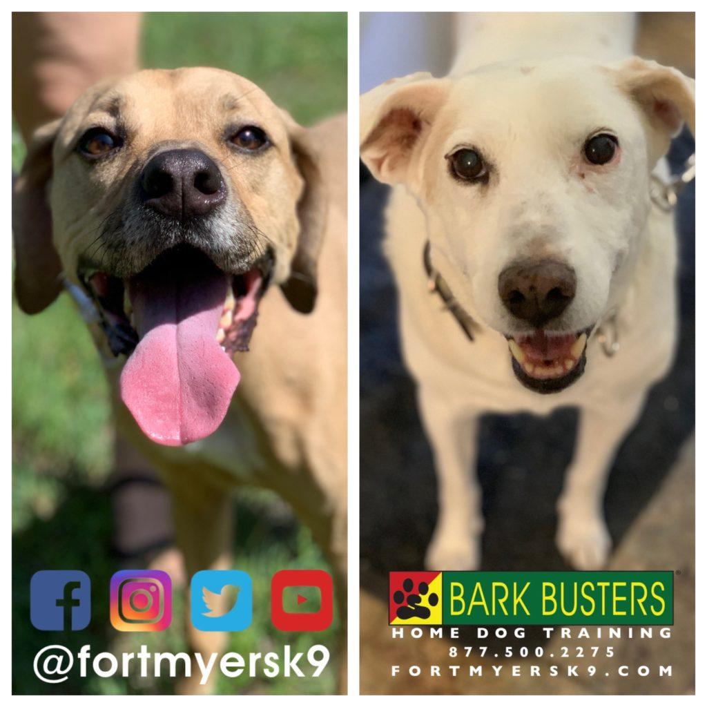 #dogsofbarkbusters. #siblingrivalry. #speakdogchangeyourlife. #fortmyersk9