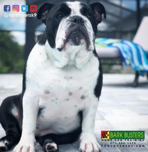 #cheatmeal #familyon3 #platinumfitness #dogsofbarkbusters #speakdogchangeyourlife #fortmyersk9