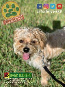 #morkie #speakdogchangeyourlife