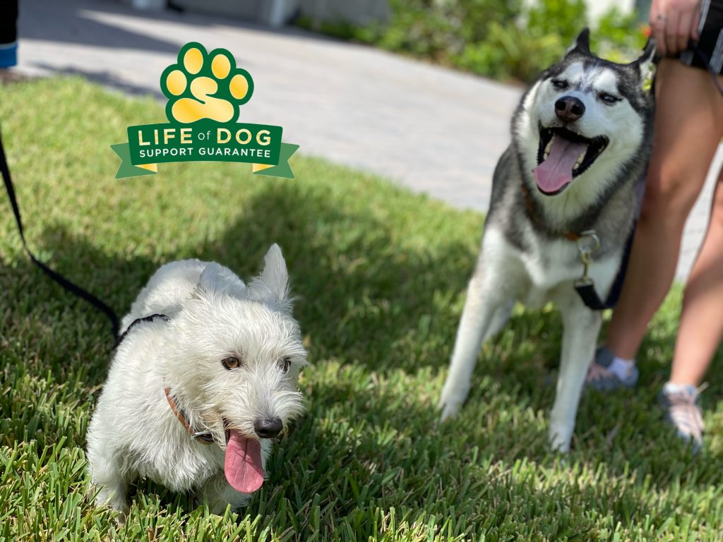 Rio #westie #westhighlandwhiteterrier and Skyhawk #husky had a great lesson today. With a drone and a neighbor with two #dachshund as distractions these pups were as cool as Skyhawk's name. #speakdogchangeyourlife #theplace #estero #fortmyersk9 @fortmyersk9 fortmyersk9.com